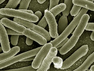 klebsiella pneumoniae urinary tract infection